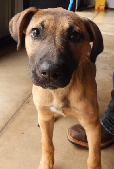 <u> Mix-Bred BLACK MOUTH CUR Male  Young  Puppy </u>