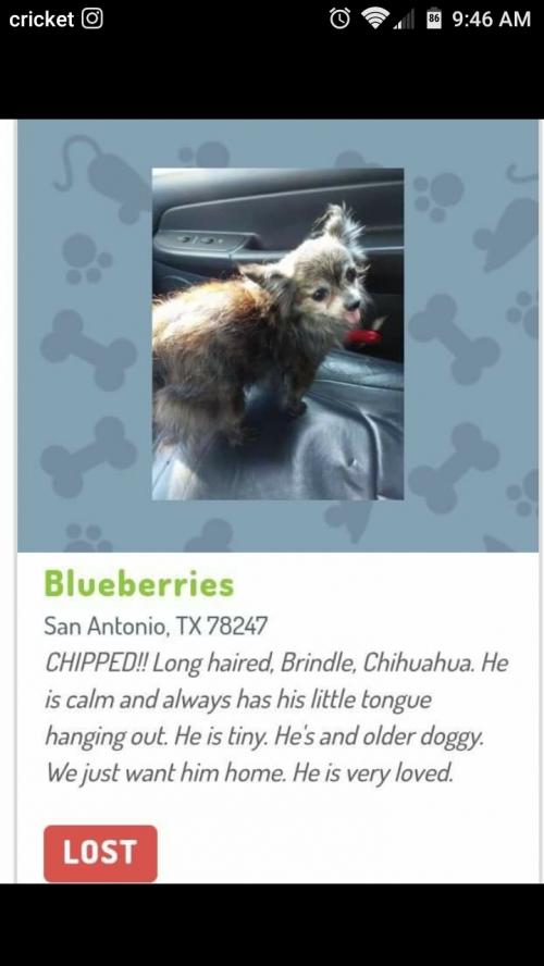 Texas Flood Pets