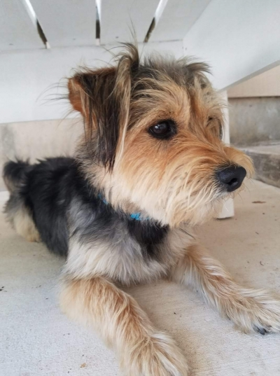 <u>TERRIER GROUP Male  Dog </u>